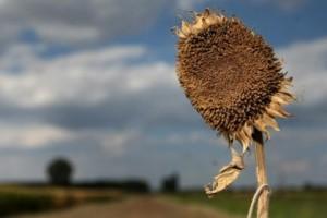 CRODemoskop: SDP klizi prema dolje, HDZ stagnira, udio neodlučnih raste